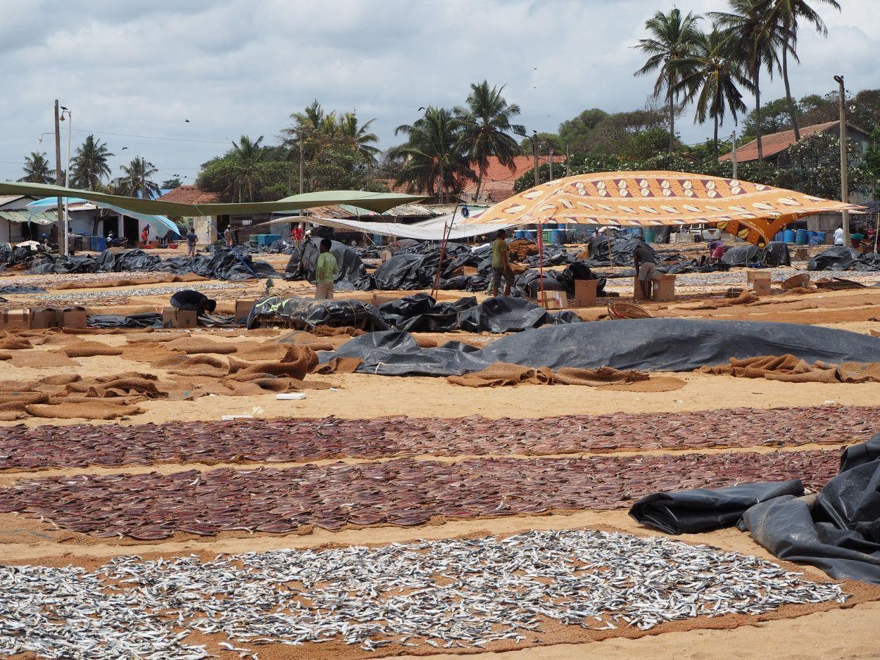 Fischmarkt in Negombo / Sri Lanka