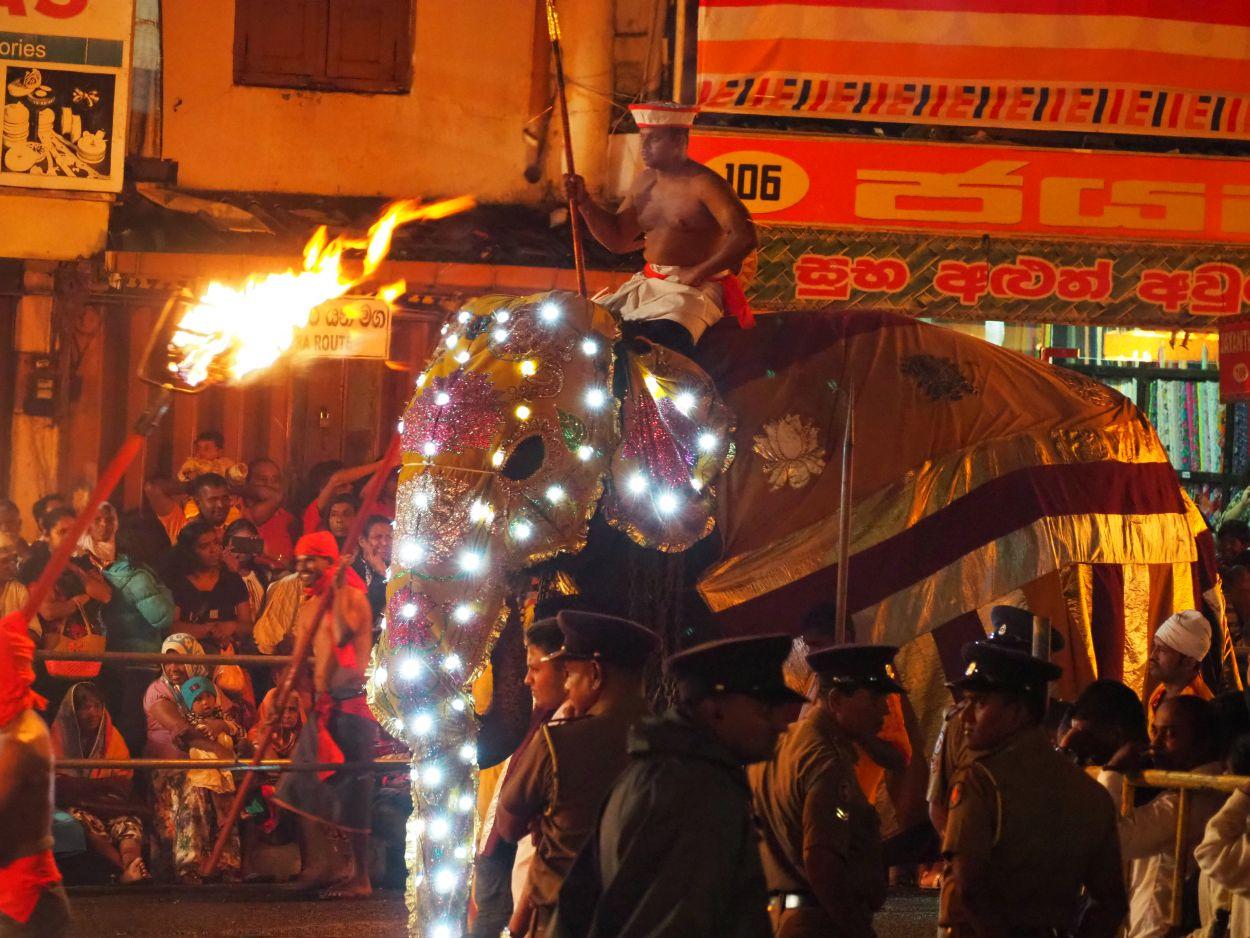 Elefanten und Feuerreifen beim Buddha-Festival in Kandy