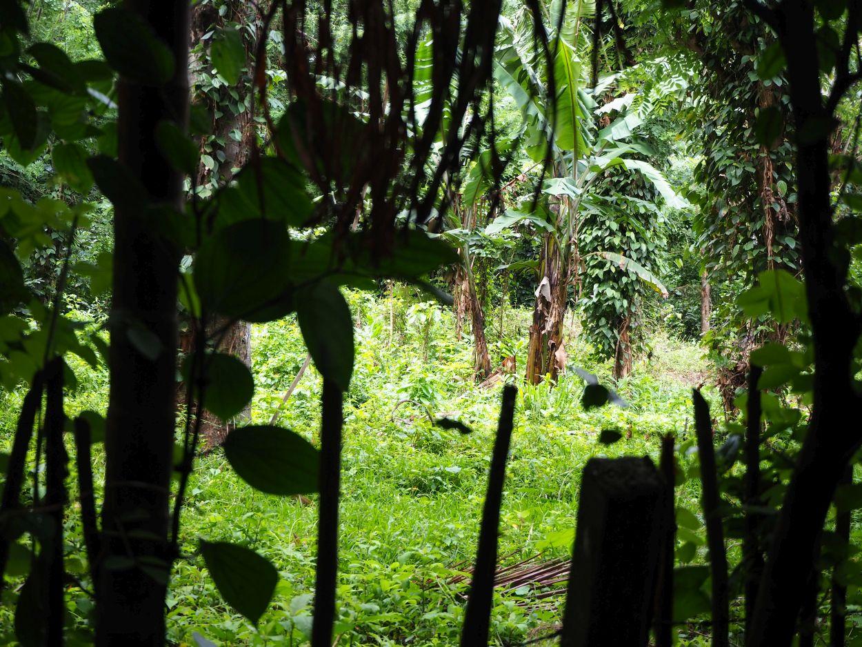 Beginn des Regenwaldes