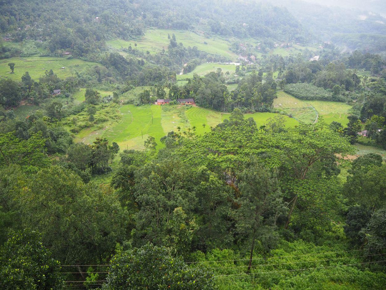 Aussicht von der Teefabrik in Sri Lanka