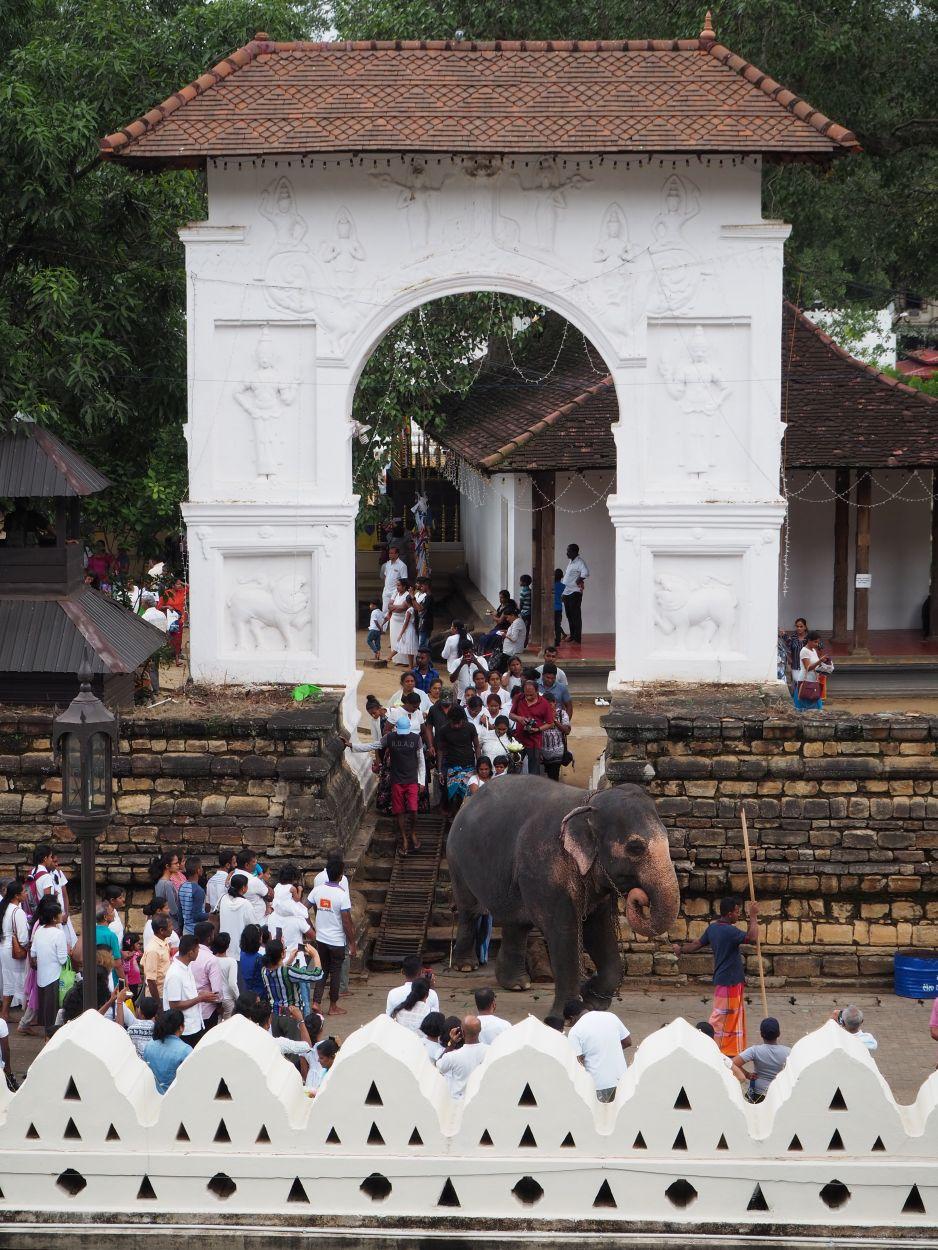 Elefanten im Zahntempel