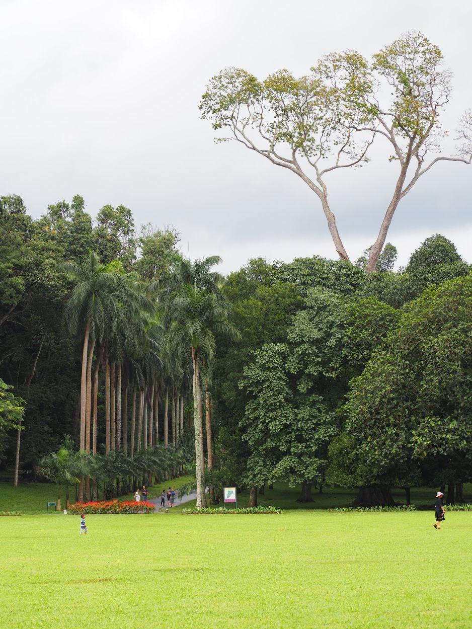 Botanischer Garten in Kandy / Sri Lanka 3