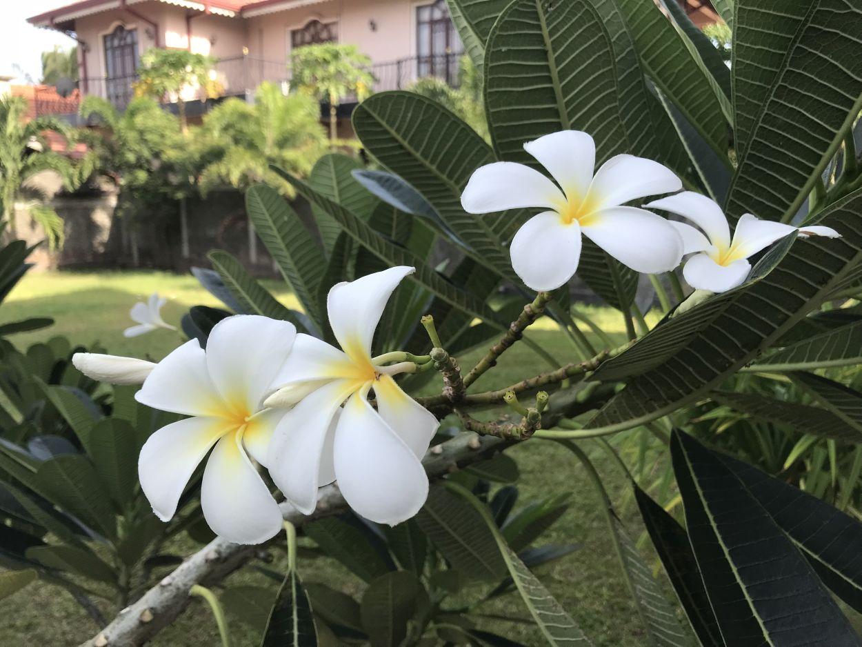 Reiseapotheke für Sri Lanka
