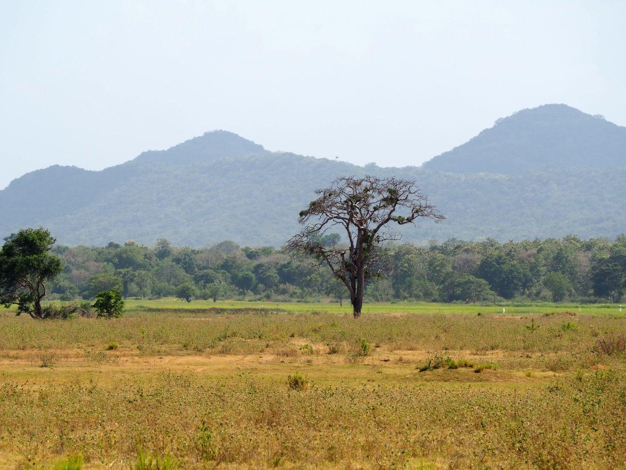Wundervolle Landschaft in Sri Lanka