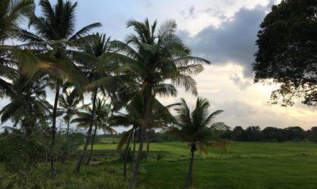 Beeindruckende Landschaft in Sri Lanka