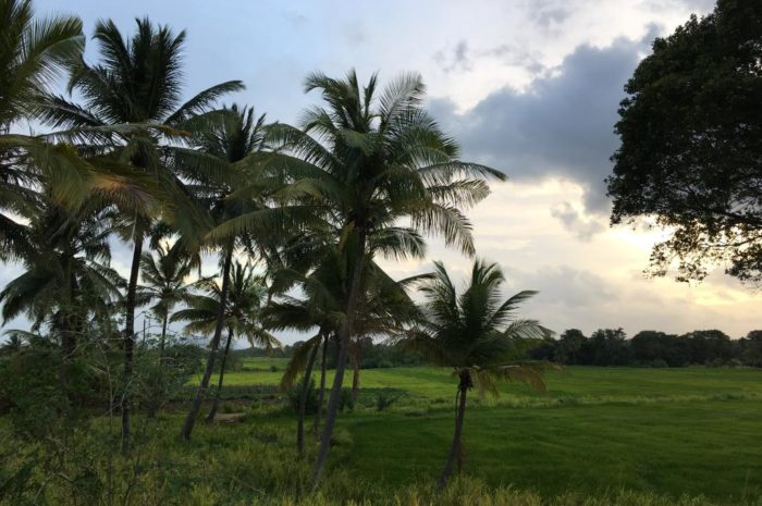 Mein Fazit zu Sri Lanka