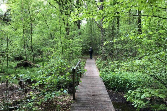 Birgeler Urwald: Spannender Premium-Wanderweg durch den Naturpark Maas-Schwalm-Nette