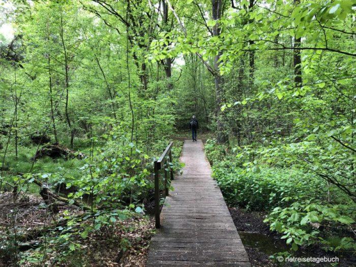 Wanderung durch den Birgeler Urwald