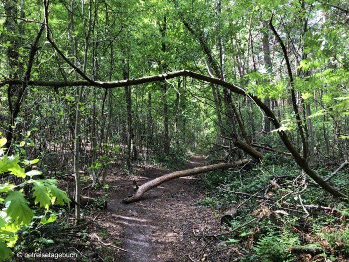 Umgestürzte Baumstämme im Birgeler Urwald
