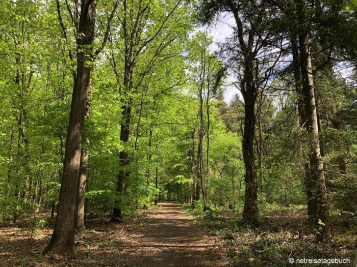 Premium-Wanderweg durch den Birgeler Urwald