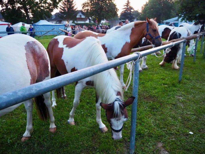 Pferdemarkt beim Barthelmarkt