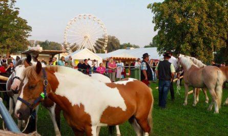 Pferdehandel auf dem Barthelmarkt