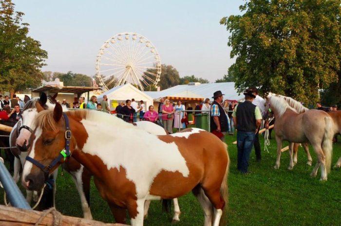 Barthelmarkt in Oberstimm – traditioneller Pferdemarkt