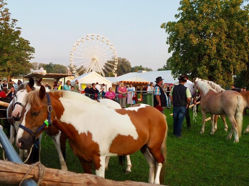 Pferdemarkt Bayern