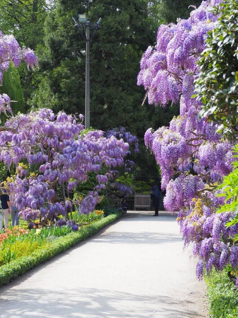 Blühender Frühling im Botanischen Garten in Leuven