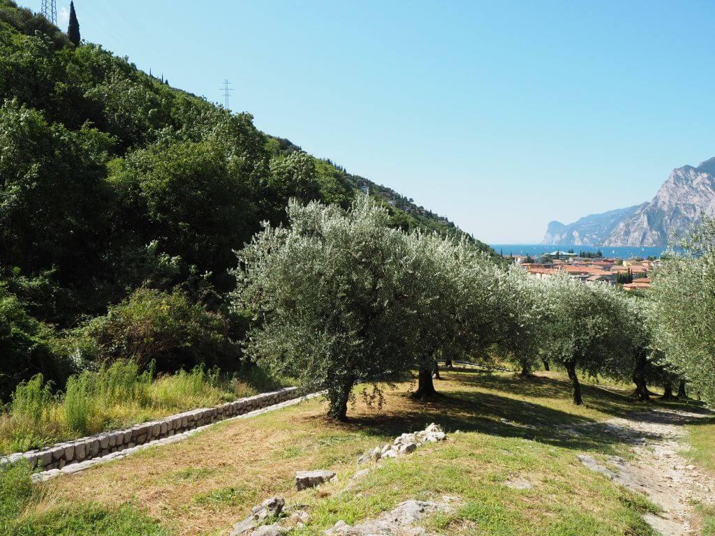 Zwischen den Olivenhainen zu Marmitte dei Gigante