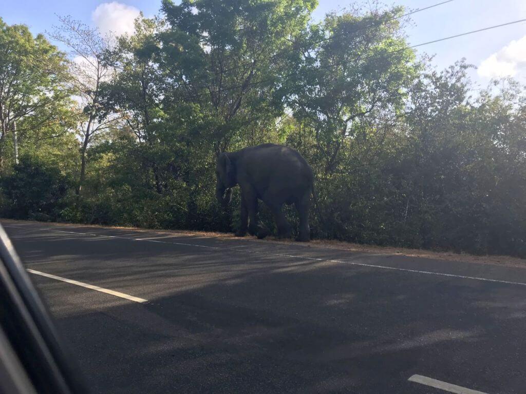 Elefanten laufen frei auf der Straße