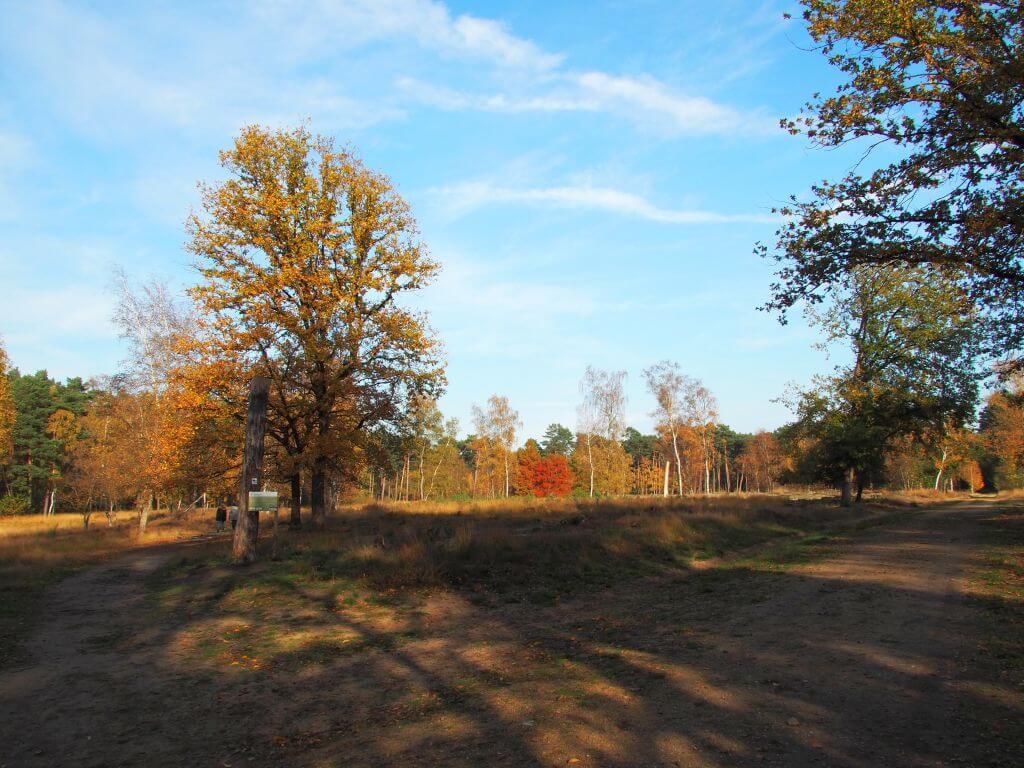 Heidegebiet Sonsbeck