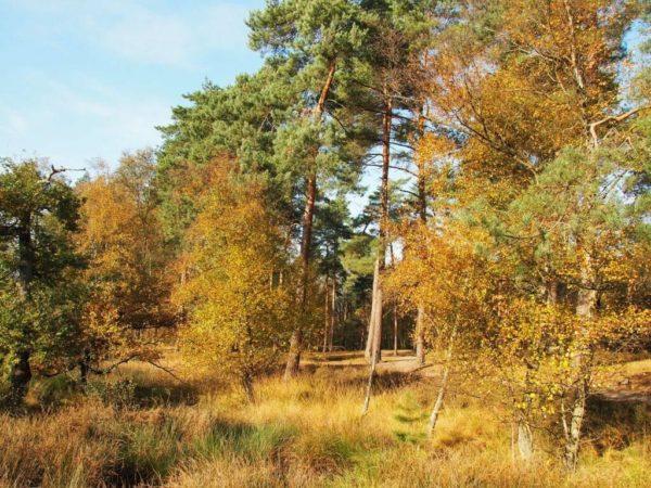 Wald im Galgenvenn