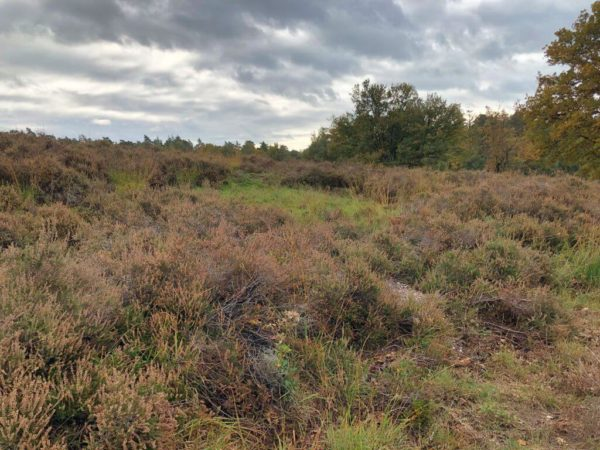 Heidegebiet Meinweg