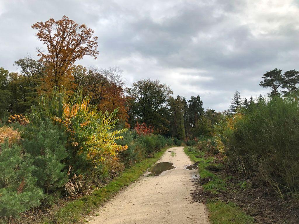 Wanderweg Nationalpark De Meinweg