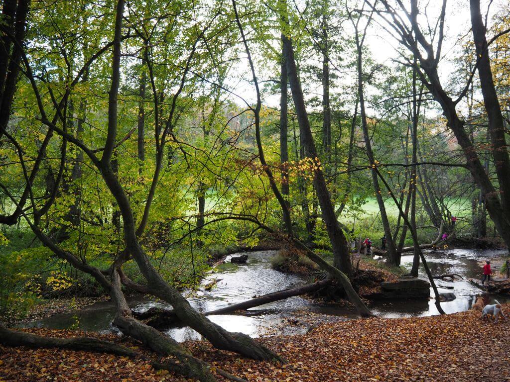 Holzer Flößwehr Neandertal