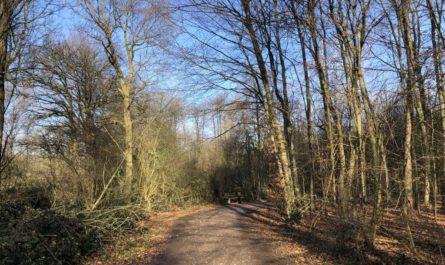 Naturschutzgebiet Volksgarten-Bungtwald-Elschenbruch