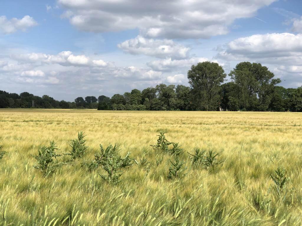Felder am Niederrhein
